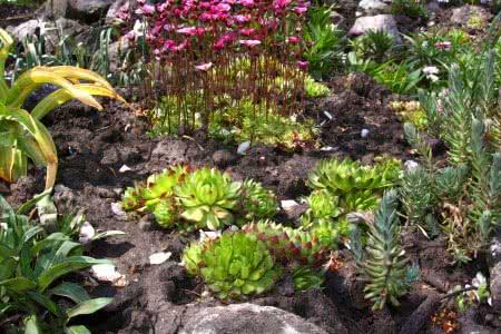 Растения-альпийцы