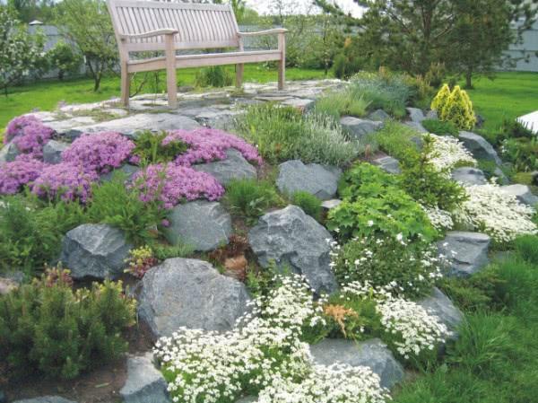 Виды каменистых садов