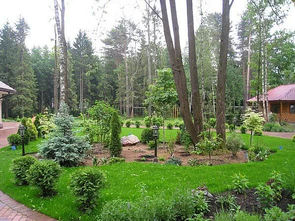 Ландшафтный дизайн деревья и кустарники