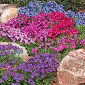 Цветы для рокария