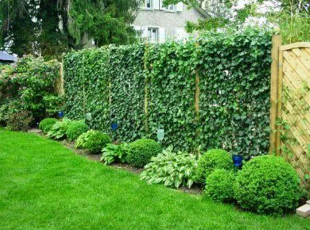 Классификация живых изгородей