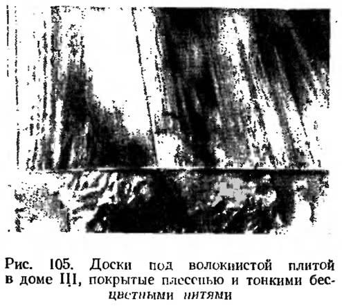 Рис. 105. Доски под волокнистой плитой в доме III, покрытые плесенью