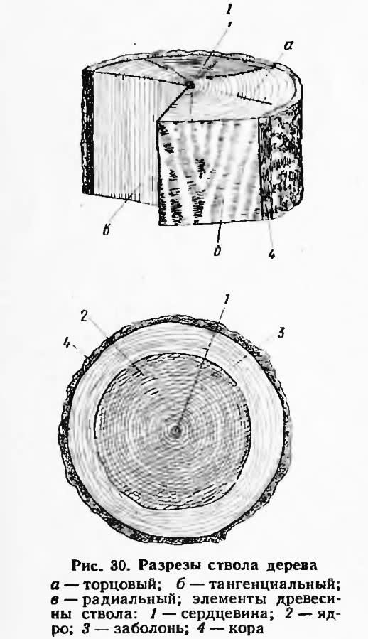 Рис. 30. Разрезы ствола дерева