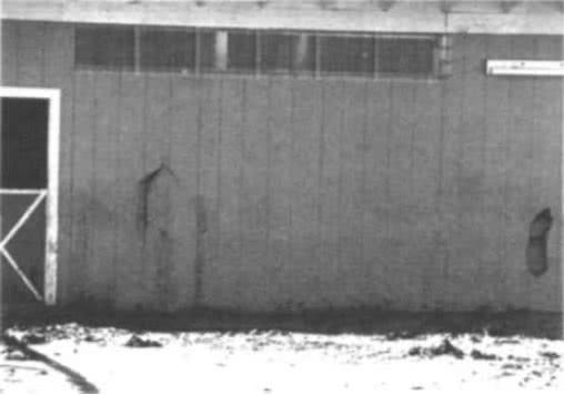 8.9. Лошадь легко пробивает обшивку из древесностружечной плиты (ДСП)