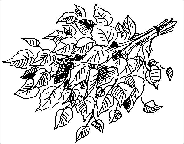 Веники