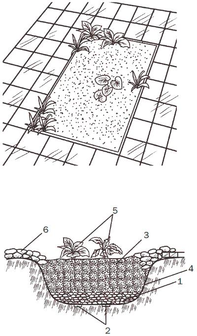 Рис. 48. Декоративное болотце: 1 – слой гравия; 2 – дренажные отверстия диаметром 1см; 3 – почвенная смесь для водных растений; 4 – гидроизоляция; 5 – растения; 6 – декоративная облицовка природным камнем.