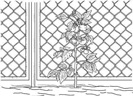 Рис. 96. Сетка для подвязки растений.