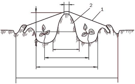 Рис. 113. Бескаркасный тип укрытия (разрез): 1 – пленка; 2 – валик из земли.