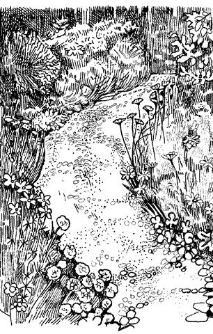 Рис. 5. Декоративный ручей в экологическом саду
