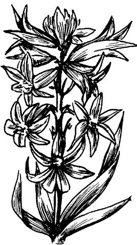 Рис. 9. Гиацинт