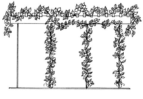Рис. 11. Однорядная пергола