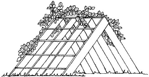 Рис. 12. Трельяж