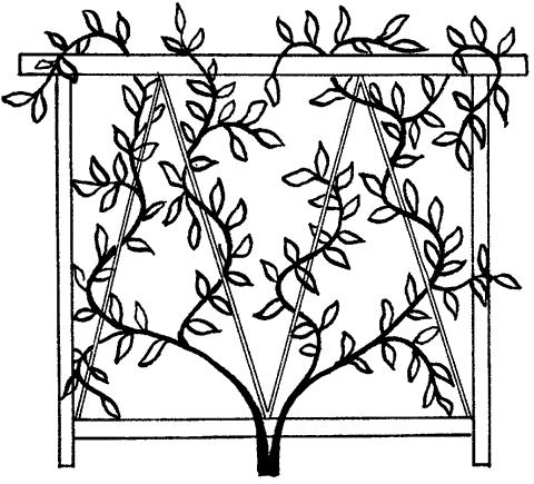 Рис. 13. Решетки для трельяжей