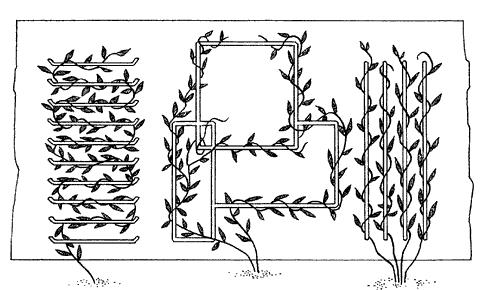 Рис. 16. Виды пристенных каркасов для вьющихся растений