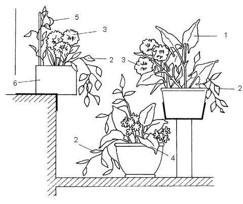 Рис. 18. Размещение цветов в вазах и горшках при оформлении лоджий и балконов с учетом наилучшего визуального восприятия: 1 – цветы с прямыми стеблями; 2 – цветы со свисающими стеблями; 3 – растения с крупными цветами; 4 – тенелюбивые растения; 5 – вьющиеся и лазящие растения; 6 – прочно закрепленный ящик с растениями