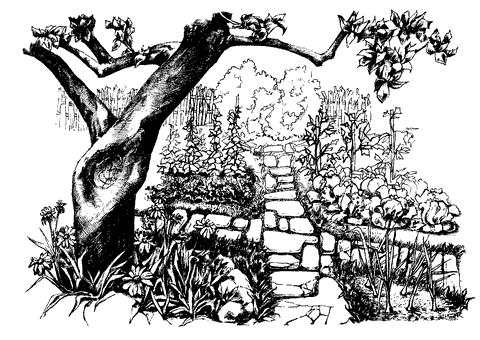 Рис. 30. Участок с прямыми дорожками, мощенными природным камнем