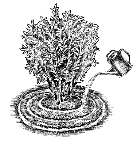 Рис. 46. Подкормка растений