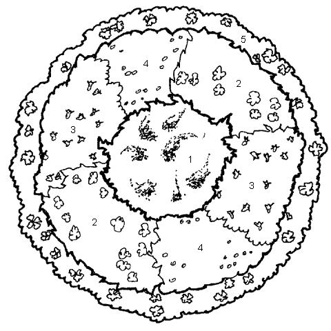 Рис. 49. Композиционная клумба для тенистых участков: 1– астильба; 2 – бузульник; 3 – хоста; 4 – копытень европейский; 5 – барвинок