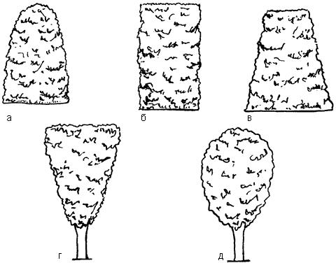 Рис. 58. Стрижка кустарников живой изгороди: а, б, в – правильная; г, д– неправильная