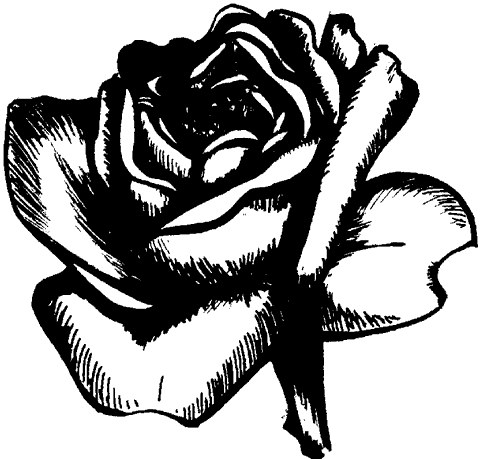 Рис. 76. Роза