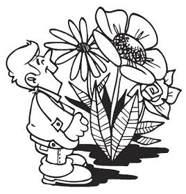 «Альпийские» растения