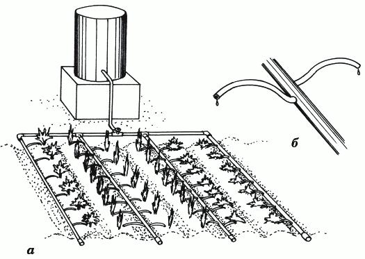 Рисунок 11. Система капельного полива: а) смонтированная система капельного полива; б) трубочка-капельница