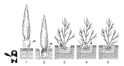 Создание живой изгороди