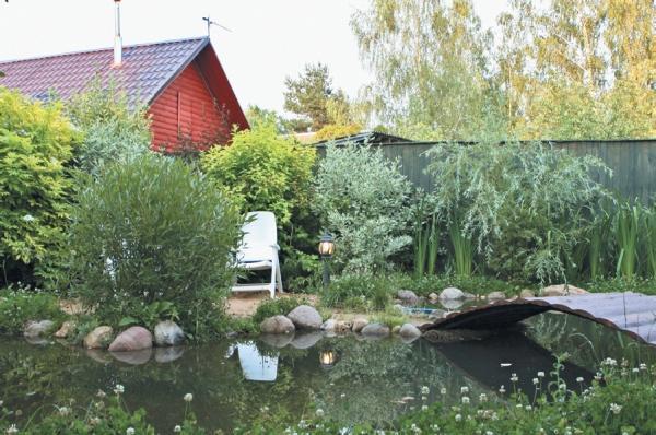 Фото 3.8.5. Обрамлен водоем целым комплексом окружающей растительности